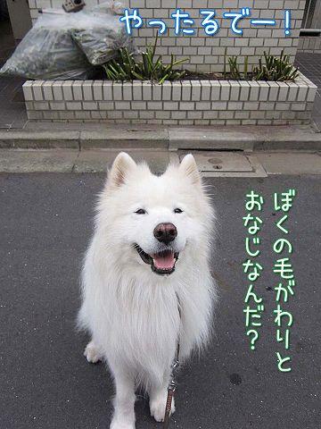 バッサリ!_c0062832_6121587.jpg