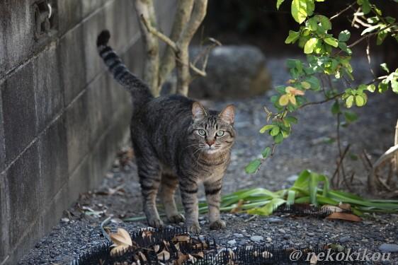 猫を探して志摩めぐり_b0138848_138224.jpg