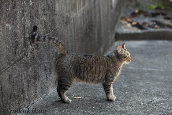 猫を探して志摩めぐり_b0138848_1383282.jpg