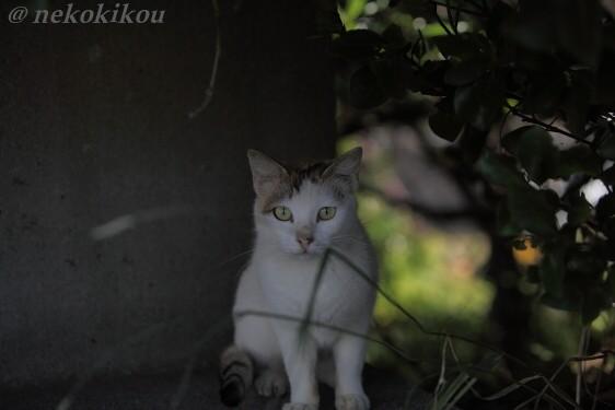 猫を探して志摩めぐり_b0138848_1401141.jpg