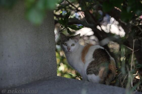 猫を探して志摩めぐり_b0138848_1401287.jpg