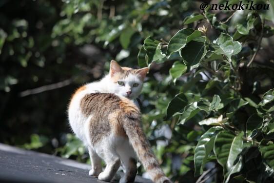 猫を探して志摩めぐり_b0138848_140335.jpg