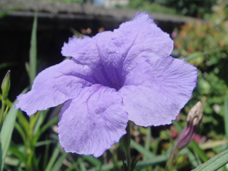 花壇リニューアルの重労働_c0108460_22151276.jpg
