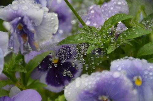 雨をうけて_e0271864_22505145.jpg