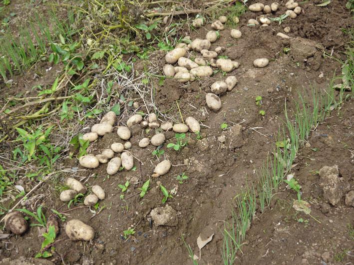 キュウリ、ナス、ミニトマトを初収穫(12・6・24~26)_c0014967_19294185.jpg