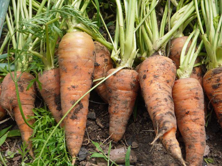 キュウリ、ナス、ミニトマトを初収穫(12・6・24~26)_c0014967_1930194.jpg