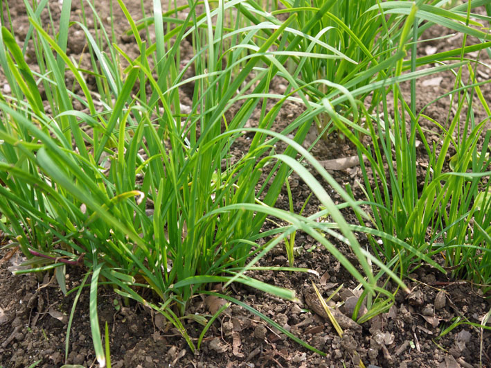 キュウリ、ナス、ミニトマトを初収穫(12・6・24~26)_c0014967_19304631.jpg