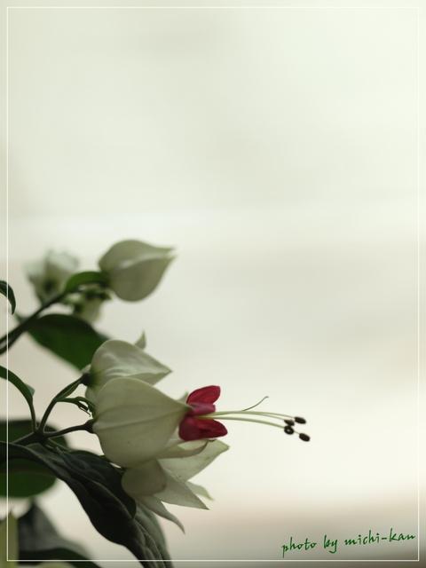 e0215073_959048.jpg