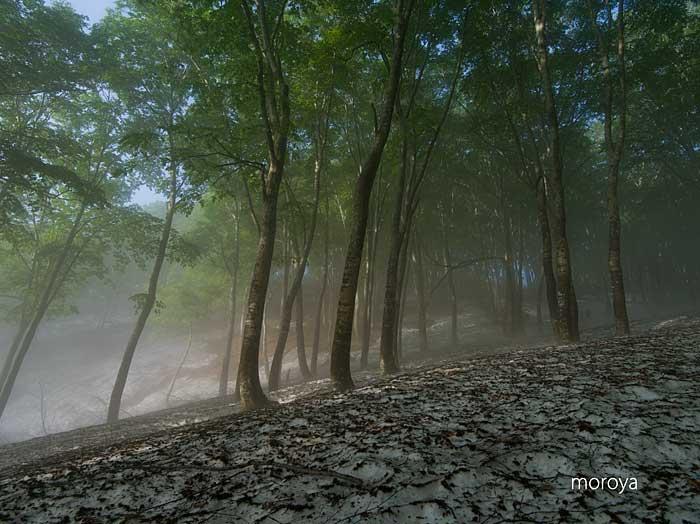 霧のブナ林_c0085877_785834.jpg