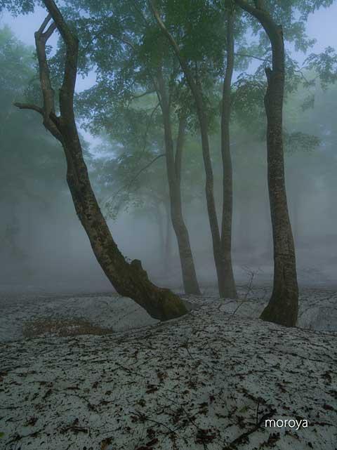霧のブナ林_c0085877_79755.jpg