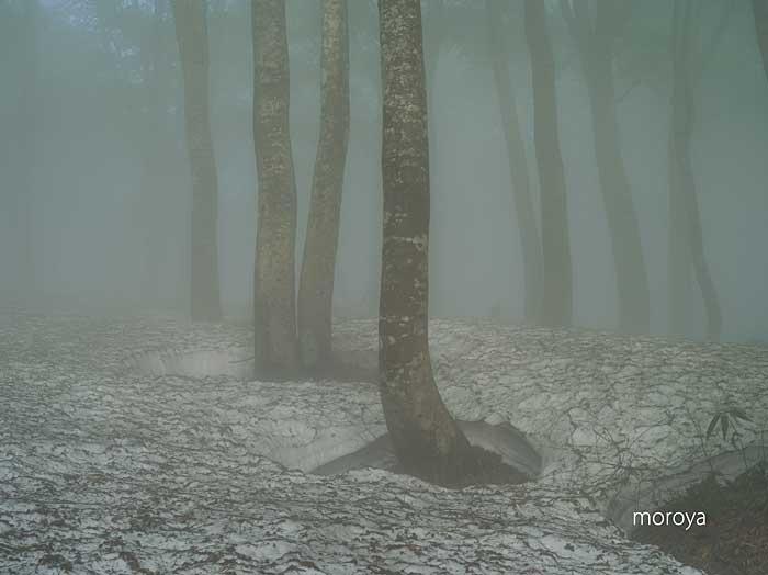霧のブナ林_c0085877_79854.jpg