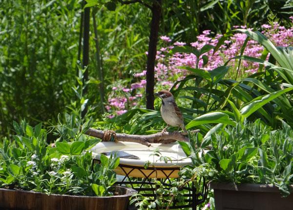 雀の親子、餌台・水場、カッコウなど_a0136293_1855564.jpg