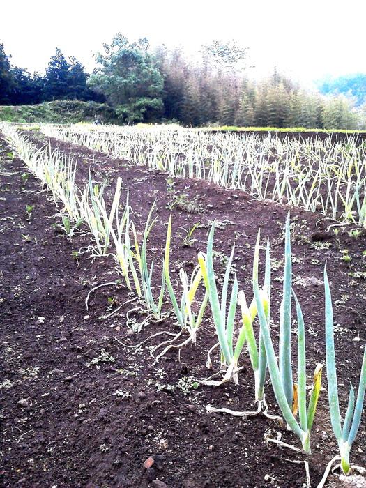 農作業・・・_d0126708_19573242.jpg