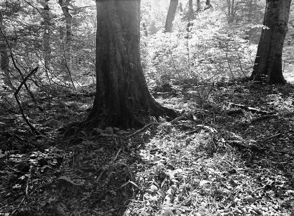 ブナの森へ 「光と影の国から」_c0065410_0274764.jpg
