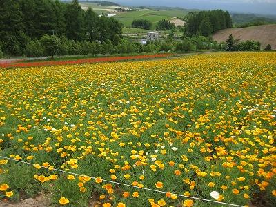北海道旅行、おうちご飯♪_f0116812_1645311.jpg