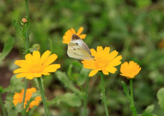 菜園で夏の花が咲き始めました_e0048413_1835531.jpg