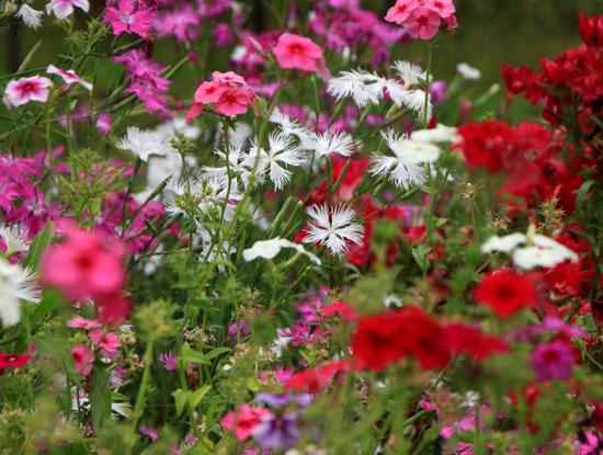 菜園で夏の花が咲き始めました_e0048413_18362934.jpg