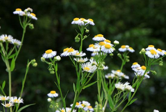 菜園で夏の花が咲き始めました_e0048413_1836538.jpg