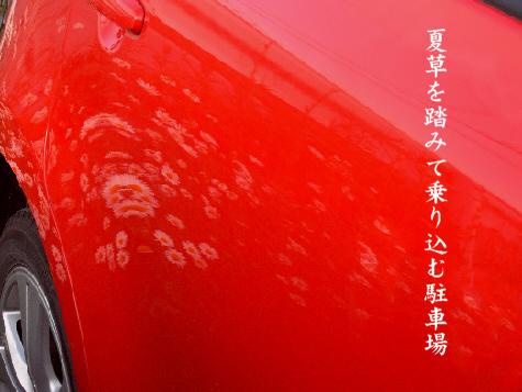 夏草_e0099713_22542757.jpg