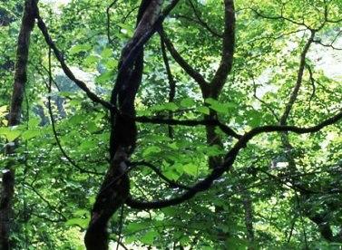 森をまもる_d0263815_1973821.jpg