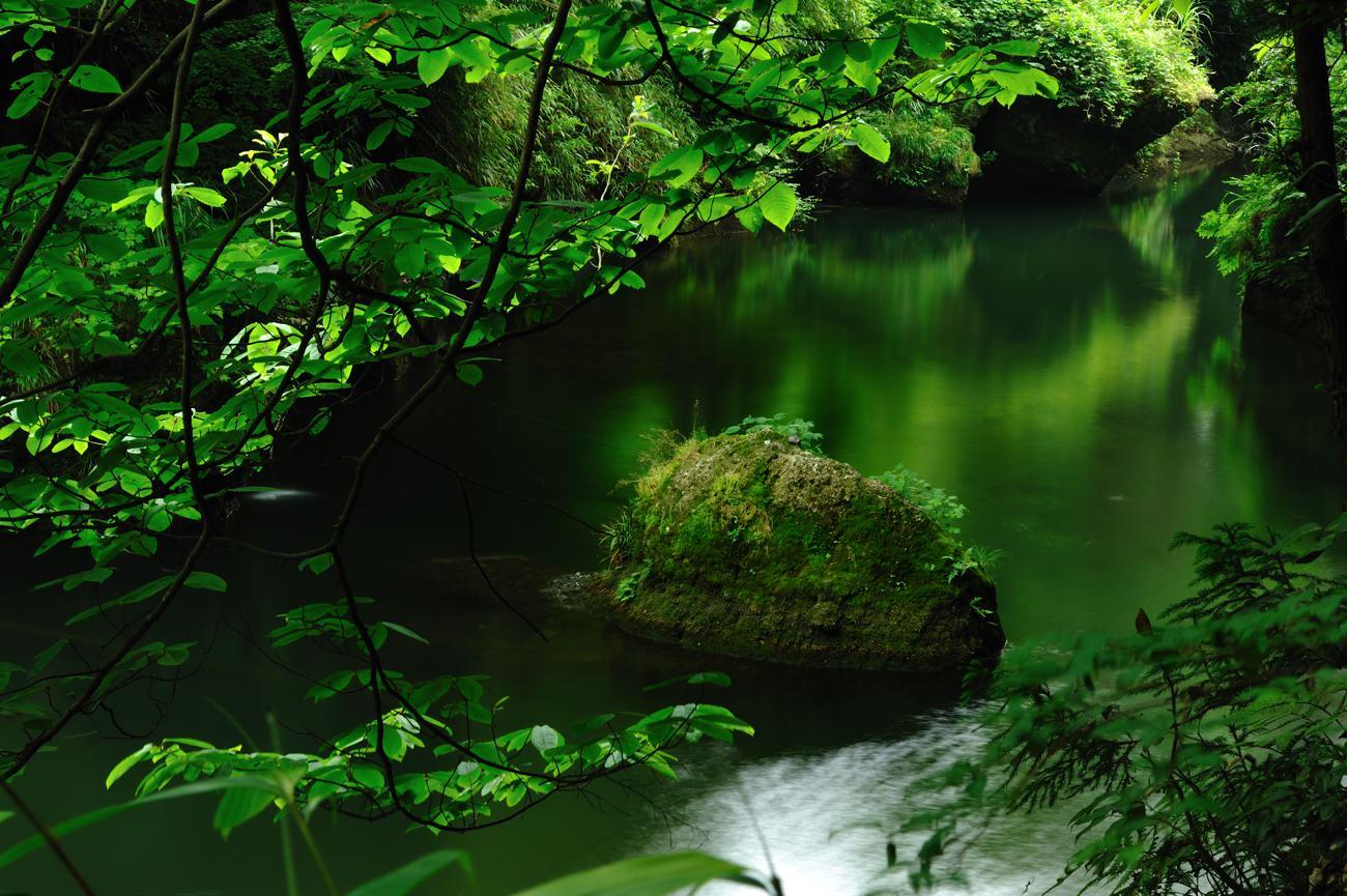 緑を求めて紅葉の名所へ_c0220824_20364121.jpg