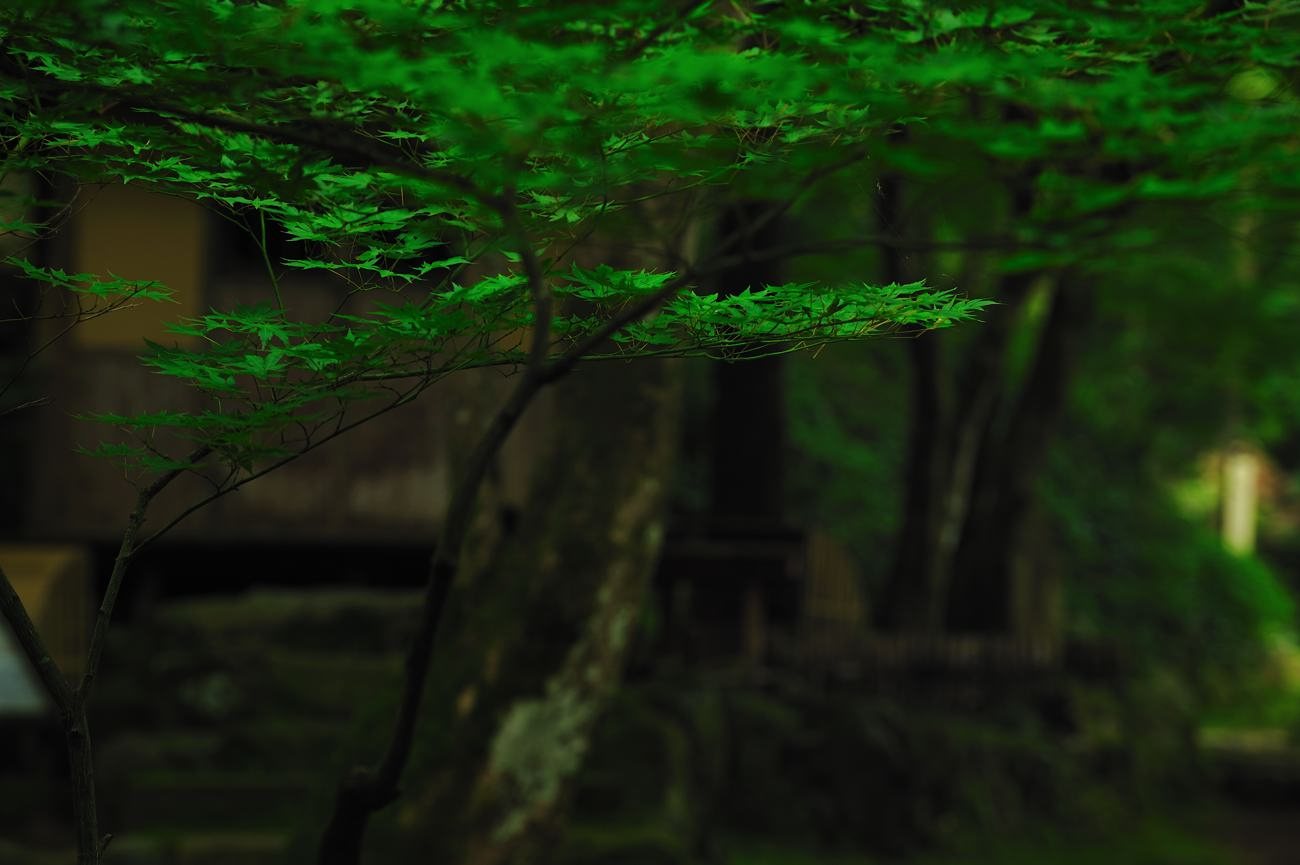 緑を求めて紅葉の名所へ_c0220824_2056261.jpg