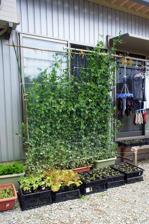 福島県内の仮設住宅を廻って来ました(最終日)_d0004728_6561070.jpg