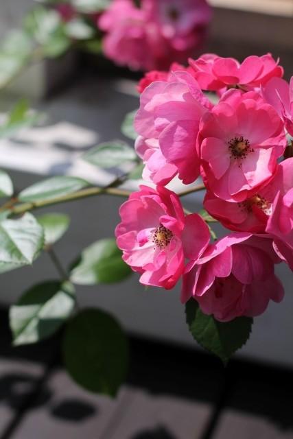今朝の庭_b0132338_1113245.jpg