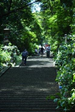 栃木市 太平山のあじさいまつり_e0227942_22183843.jpg