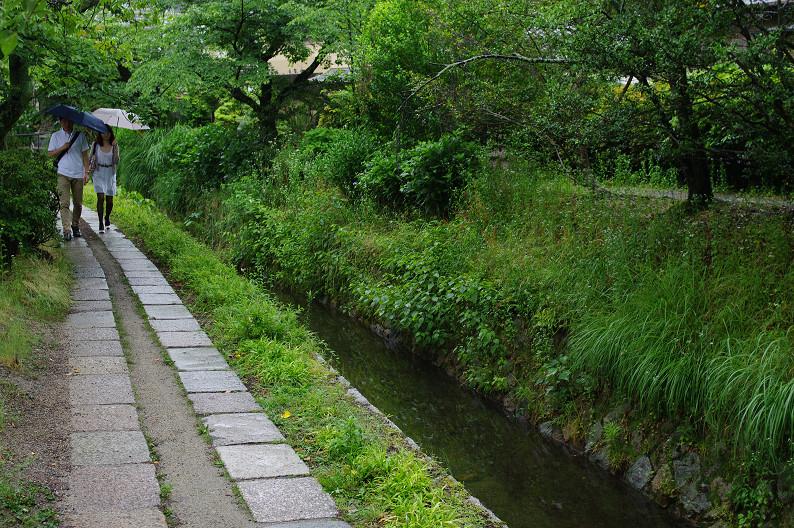 雨の哲学の道..._f0152550_211364.jpg