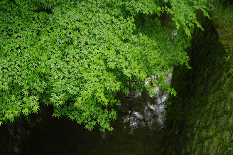 雨の哲学の道..._f0152550_2115020.jpg