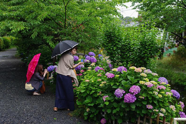 雨の哲学の道..._f0152550_211528.jpg