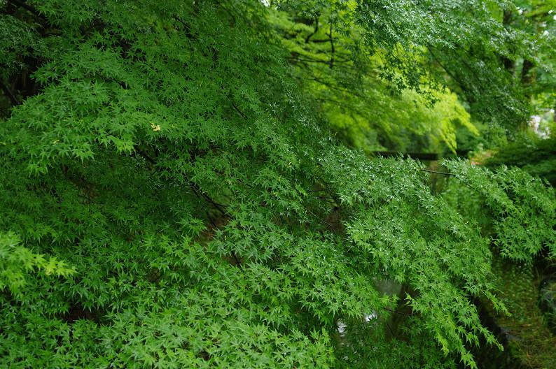 雨の哲学の道..._f0152550_212189.jpg