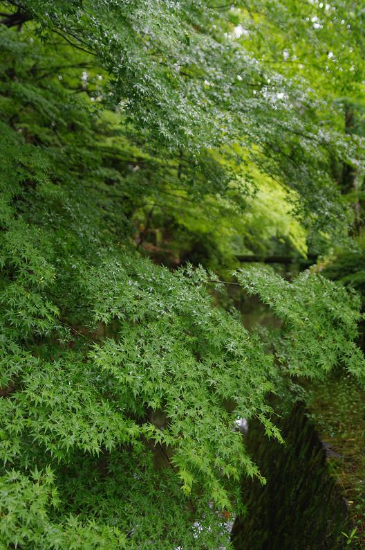 雨の哲学の道..._f0152550_212618.jpg
