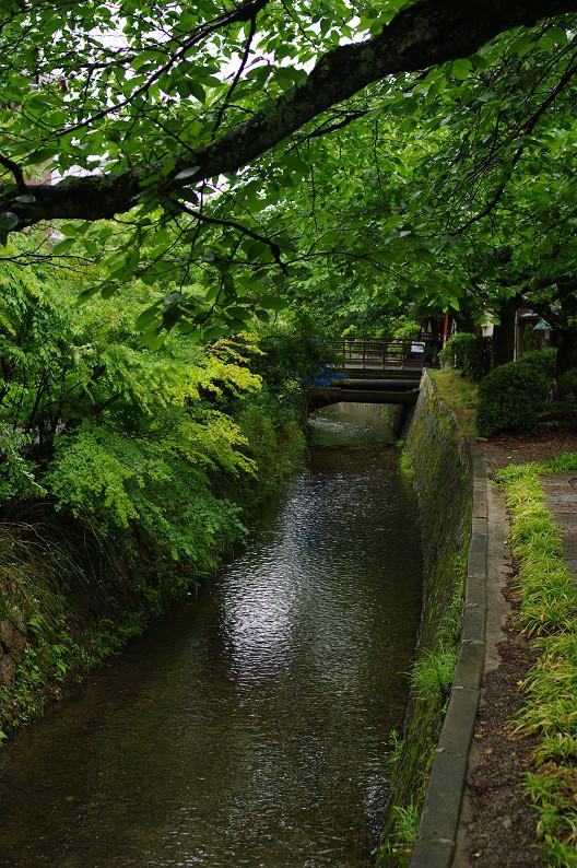 雨の哲学の道..._f0152550_2133920.jpg