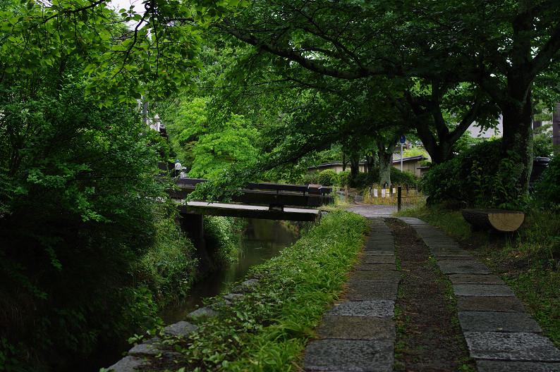 雨の哲学の道..._f0152550_2134519.jpg