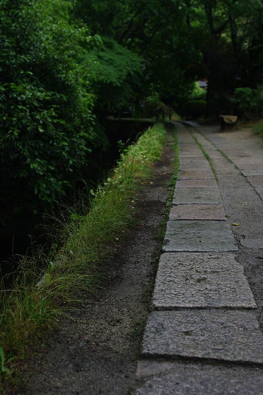 雨の哲学の道..._f0152550_2135151.jpg