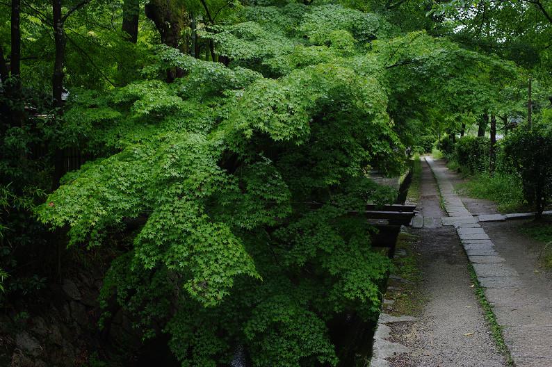 雨の哲学の道..._f0152550_2143081.jpg
