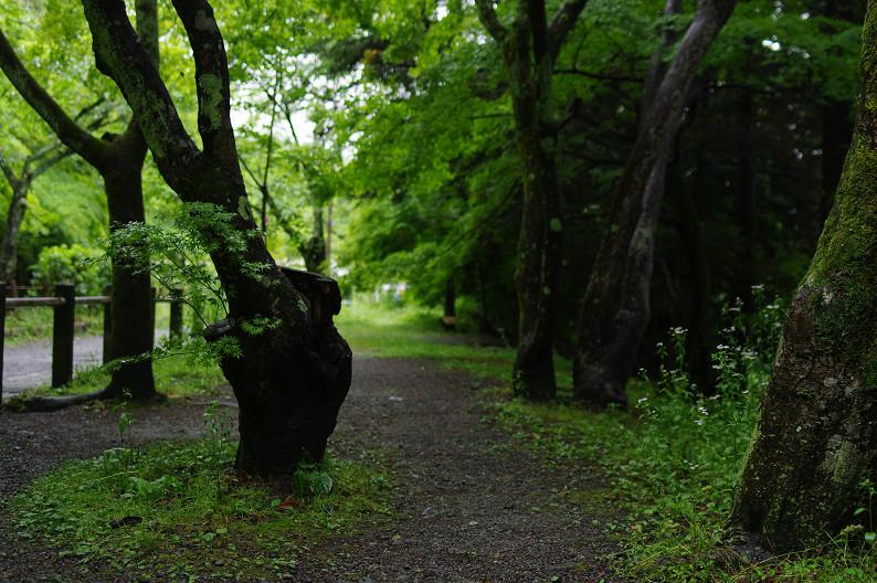 雨の哲学の道..._f0152550_2144371.jpg