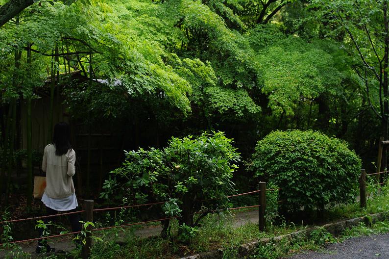 雨の哲学の道..._f0152550_2145759.jpg