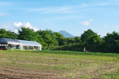 最近の大豆畑とジャガイモの花_c0110869_21372956.jpg