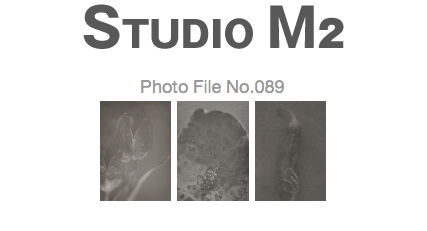 STUDIO M2 Photo File No.089「モノクローム カミキリムシ」_a0002672_2471368.jpg