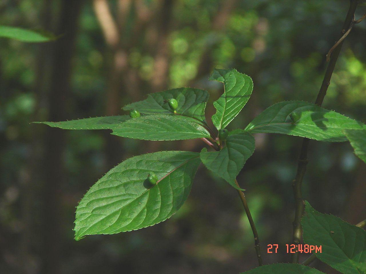 f0104277_2004082.jpg