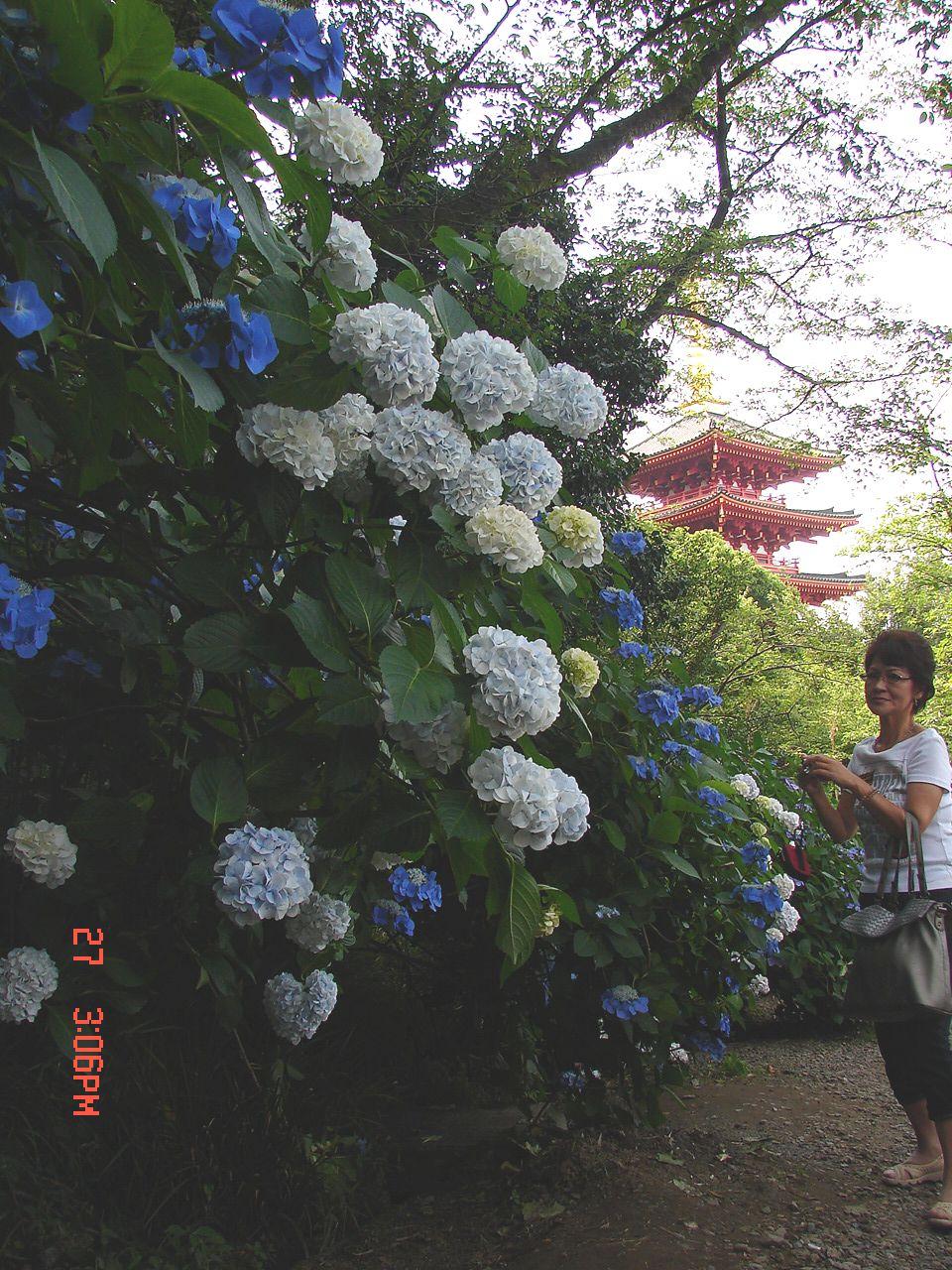 f0104277_20111078.jpg