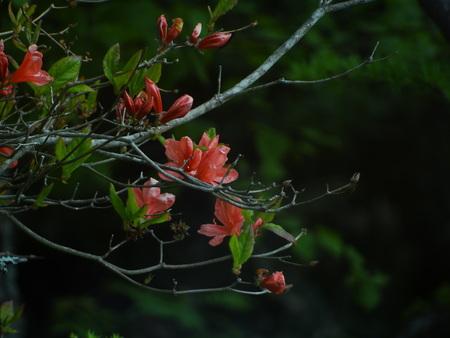 高峰温泉周囲の花達_e0120896_6534139.jpg