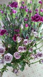 紫の花_f0054809_12575441.jpg