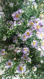 紫の花_f0054809_12582118.jpg