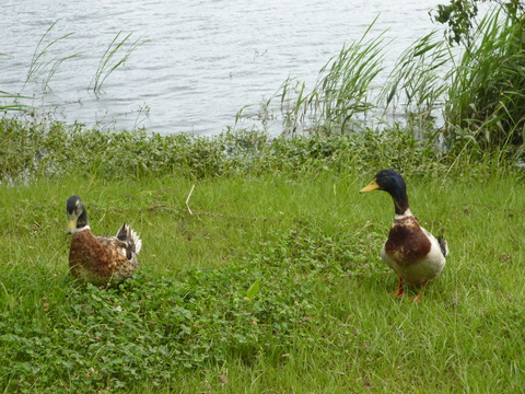 動植物園の裏口から下江津湖へ(^^)_b0228113_9415210.jpg