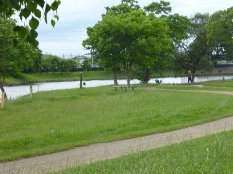 動植物園の裏口から下江津湖へ(^^)_b0228113_9425889.jpg