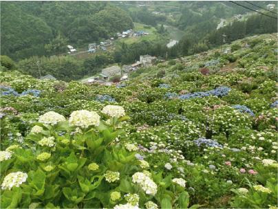散歩部活動報告 「紫陽花のある風景 2012」_e0142619_2274782.jpg